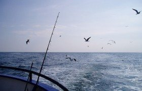 Deep sea fishing boat tour